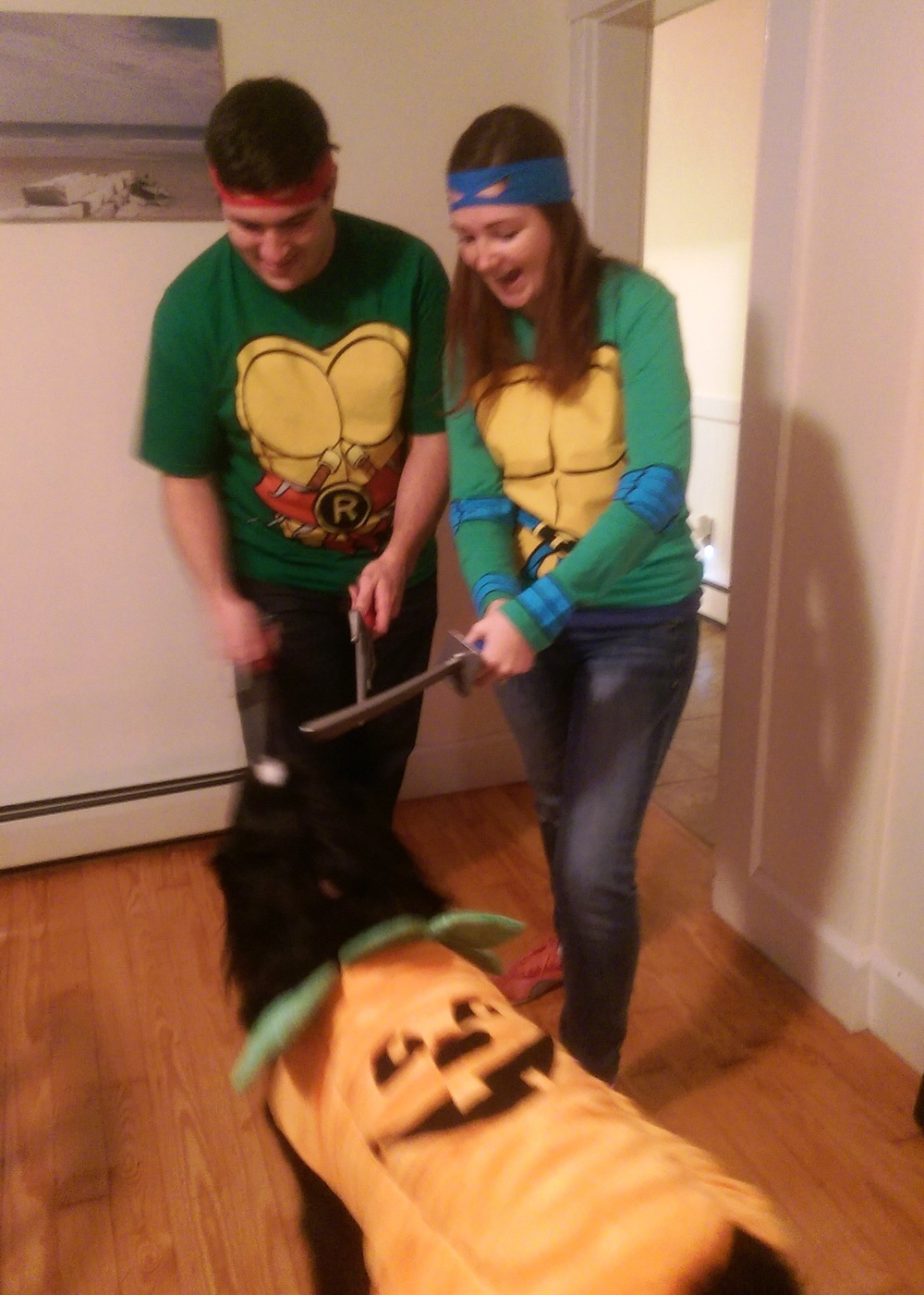 Ninja Turtle pumpkin dog