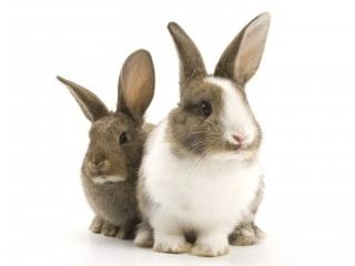 small_rabbits-white-background.jpg