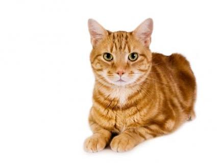 89935-425x331-cat-slide-1.jpg
