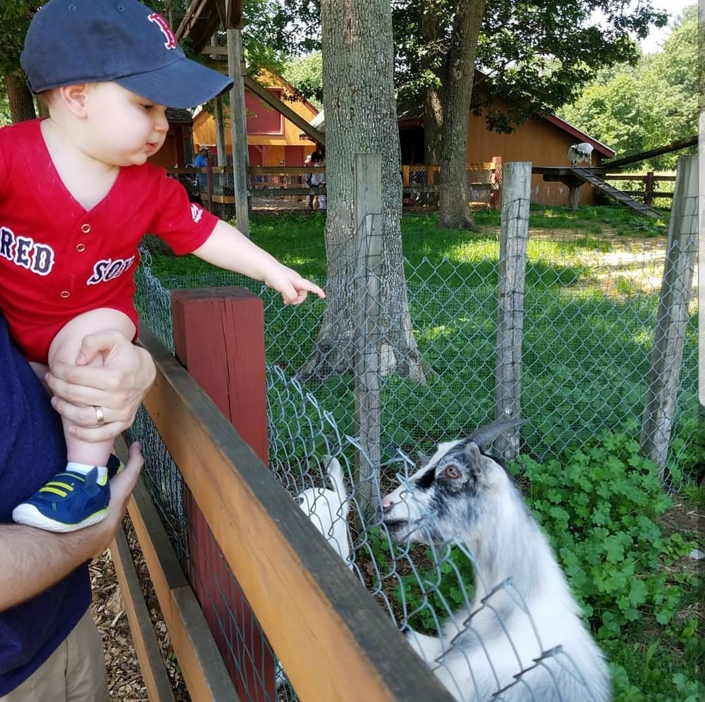 Parlee Farms MA Petting Zoo