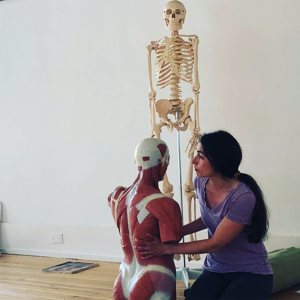 Anatomy & Physiology #3: the Shoulder Complex — Iyengar Yoga Center ...