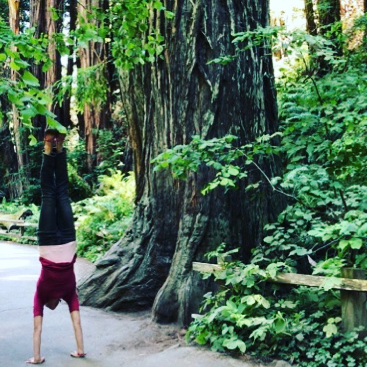 Adho Mukha Vrksāsana (downward facing tree pose) in Muir Woods (on a day off from class)