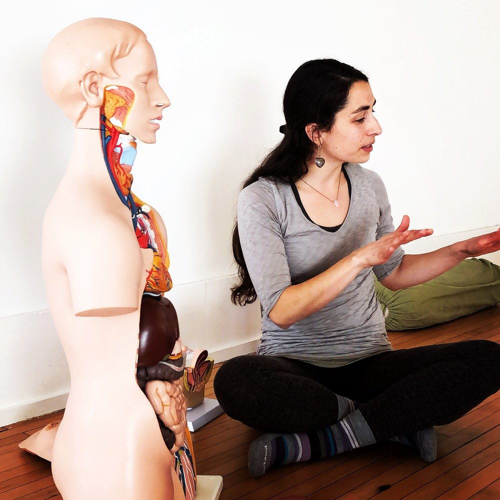 Know Your Body Anatomy Physiology Class Series At The Iyengar