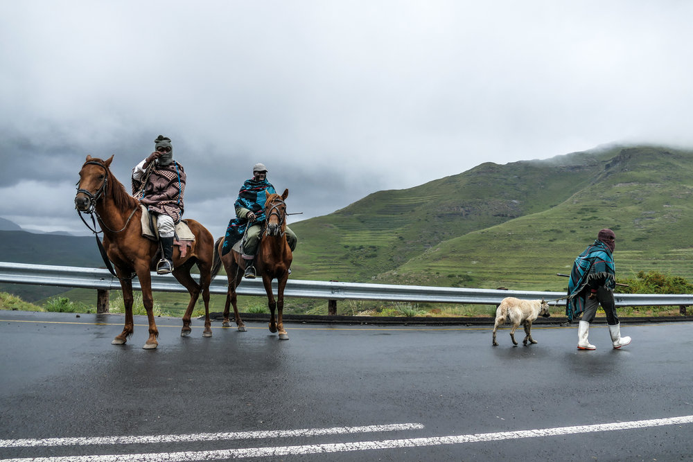 Basotho men wearing traditional Basotho blankets herding their sheep on the main road between villages