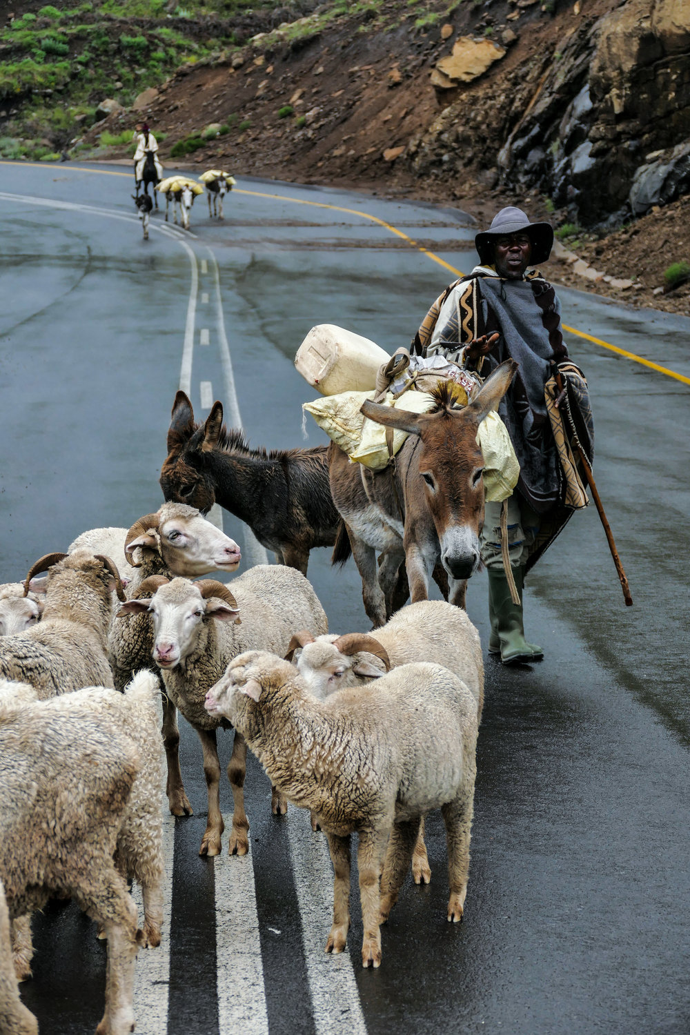 Basotho shepherd and son travel with their flock of sheep in Lesotho