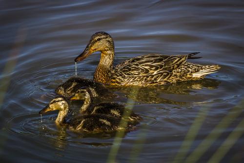 Birds — Don Gasler Photography