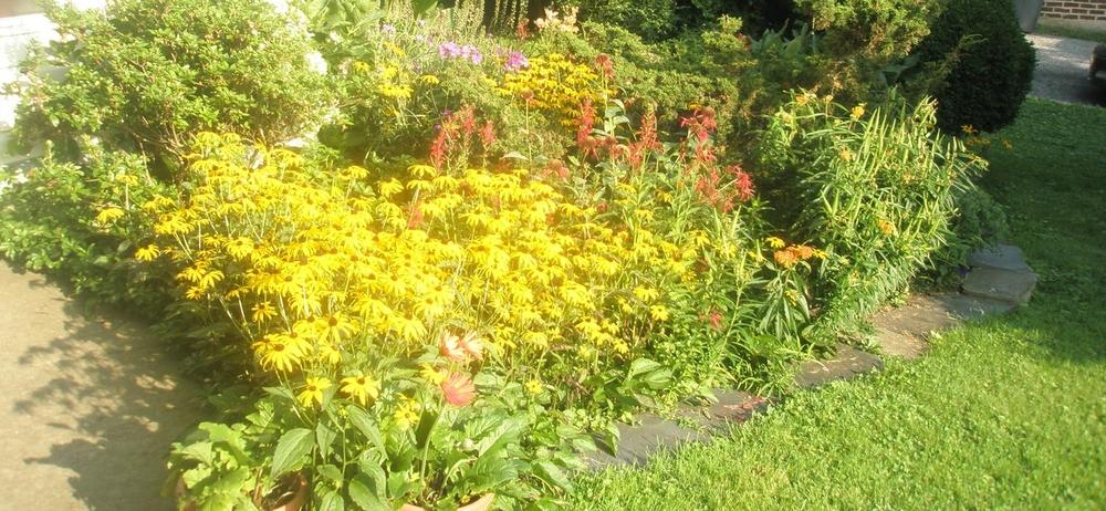 Tom's gardens in full bloom outside his studio window.......