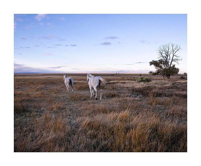 Couple of unicorns @ranchlands #ranchlandszapataranch