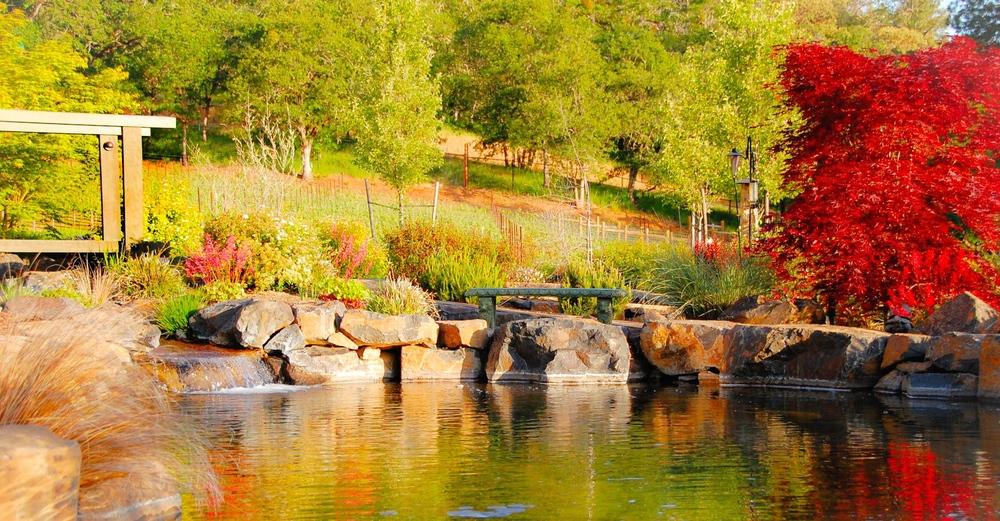 Pond at DANCIN.