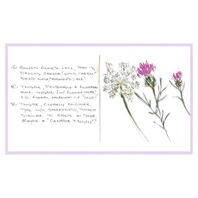 Came across a #sketchbookpage from last summer in #Newport -  #thistle & #queenanneslace flowers, sketched by the beach. Is it too early to start missing summer? 🌸 #sketchbook #floralillustration #elisevavruskrohn #fashionillustration #botanicalillustration #watercolortattoo #botany #cliffwalk #newportri #newportmansions #danielsmithwatercolors