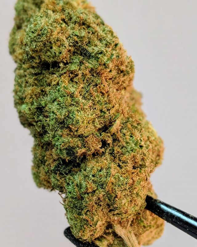 This #Jack's #Fire on our #medside is so beefy it can't even fit in the frame and smells like it wants to kill you! Come get some before it disappears! #420 #420photography #420blazeit #coloradomarijuana #coloradocannabis #smokemoreweed #highlife #bouldercolorado #denvercolorado #bluntsmoke #bouldercannabis #710 #frosty #budz #bestbudz #smokeweedeveryday #staylifted #milehigh #ganja #greens #cheechandchong #stickybuds