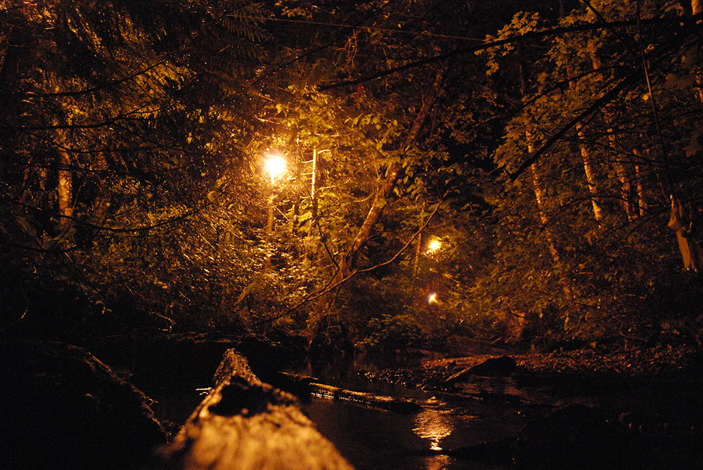 Experimental streams with high-pressure sodium streetlights installed above them had fewer drifting insects than streams without streetlights, but didn't seem to differ in other ways.  (Image of experimental streetlight set-up by Nora Schlenker)