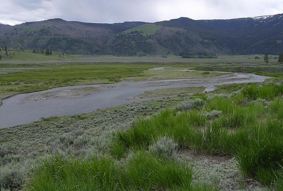 Meandering stream and wide floodplain in Yellowstone National Park with almost no riparian trees.  (Image by Emily Benson)