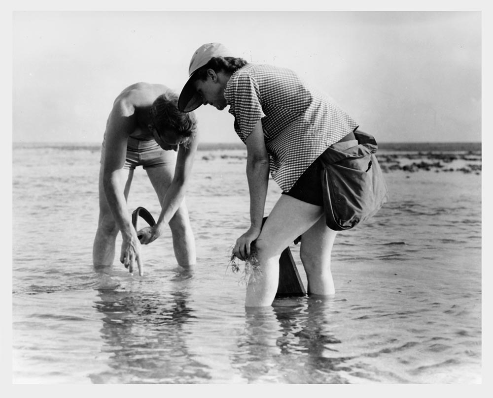 Rachel Carson and colleague Bob Hines collecting marine samples in Florida in 1952.  (Image by U.S. Fish & Wildlife Service via  USFWS National Digital Library )