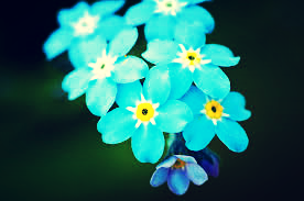 keepr-forget-me-not