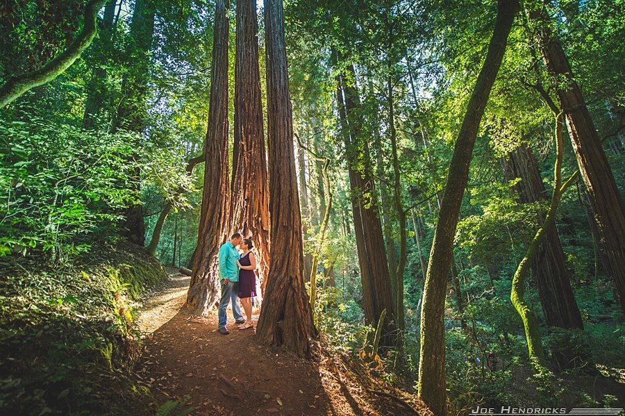 beautiful backlighting in muir woods