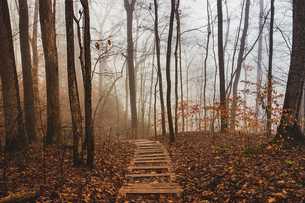 This was the path to blue hole in the early morning mist
