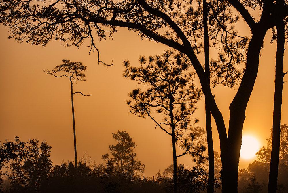 043d2-sunrisesunrise.jpg