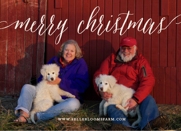 Merry Christmas from Mary, Jim, Belle and Dino (and Morgan too!!)