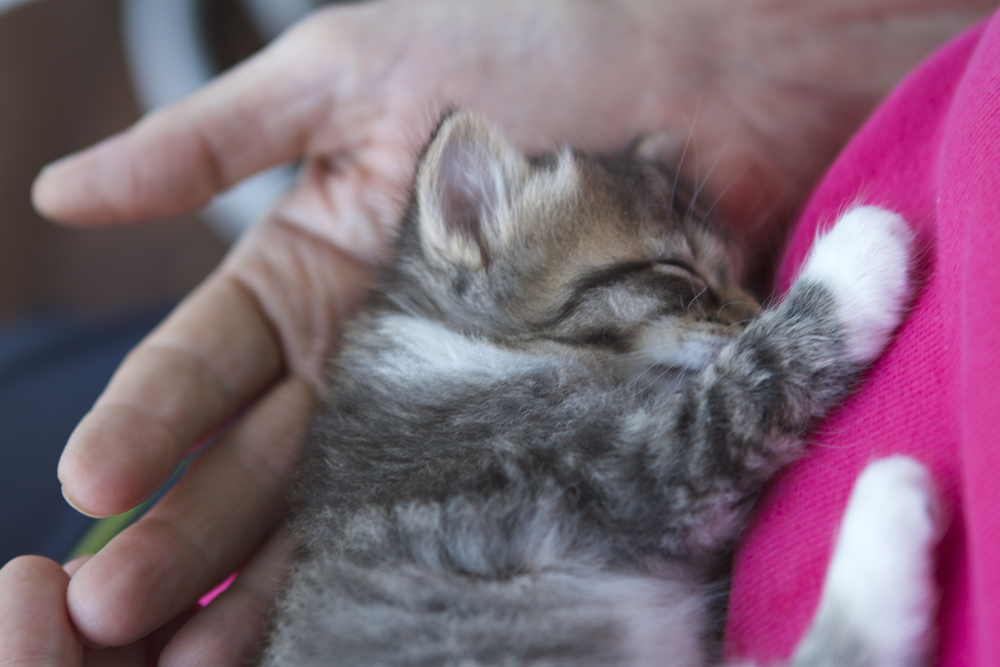 It was bound to happen that we would find an abandoned farm kitten in need...