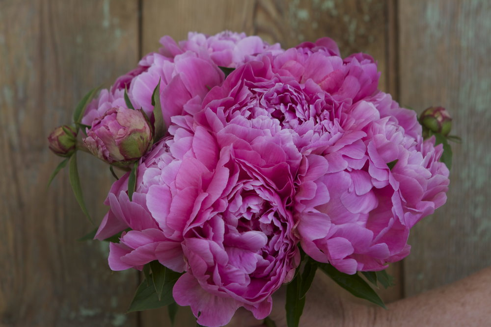 "Peony ""Normie"" is quite a showoff."