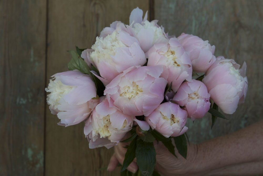 Very excited to learn my fiancee has peonies too ;)