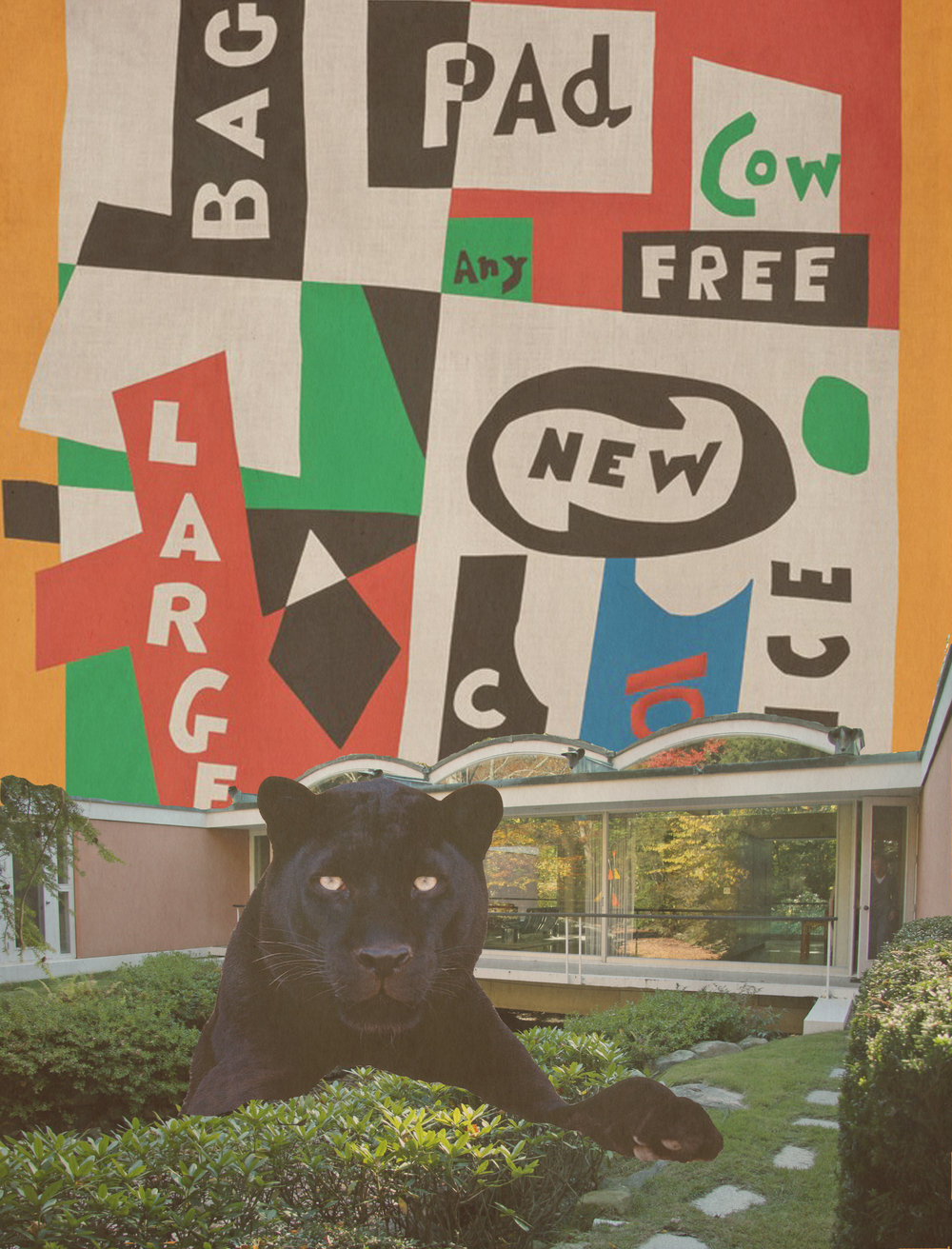 black cat davis.jpg