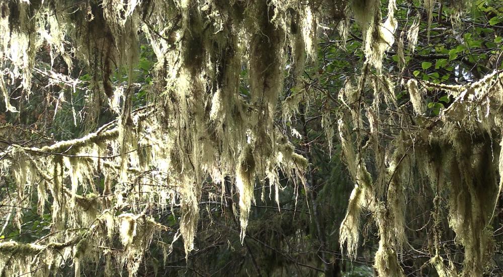 Tree limbs...