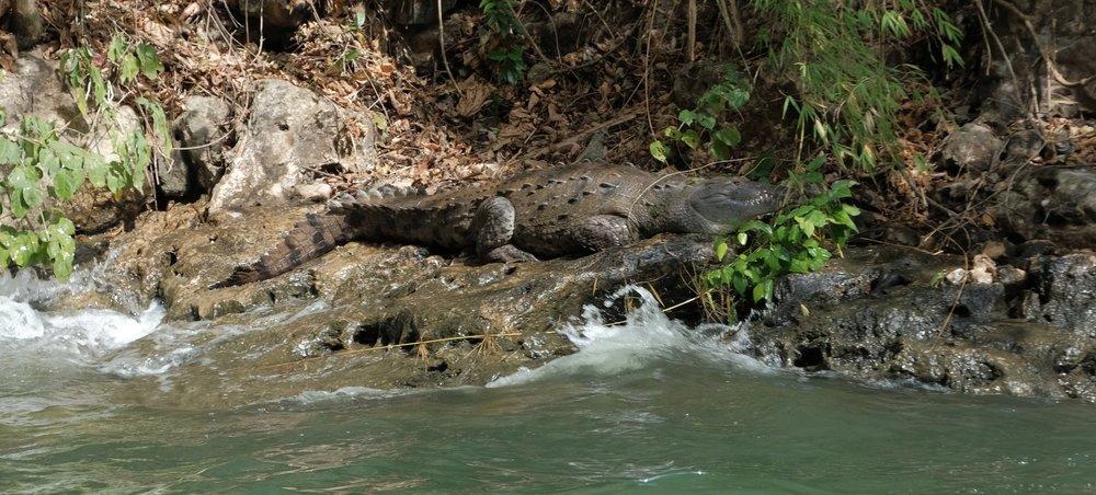 Fresh water croc!