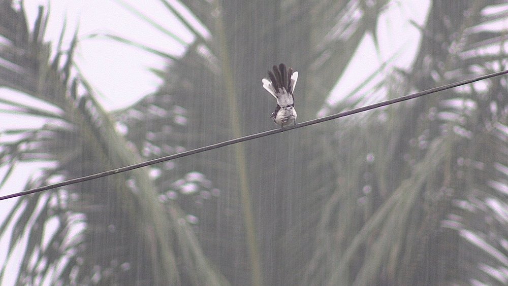 A plucky bird doing the late afternoon rain dance