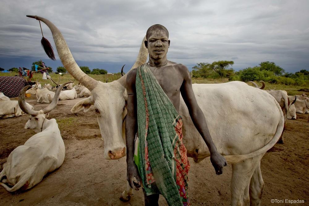 Joven mundari posando con una vaca de su rebaño