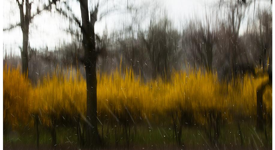 Tree12b_web.jpg