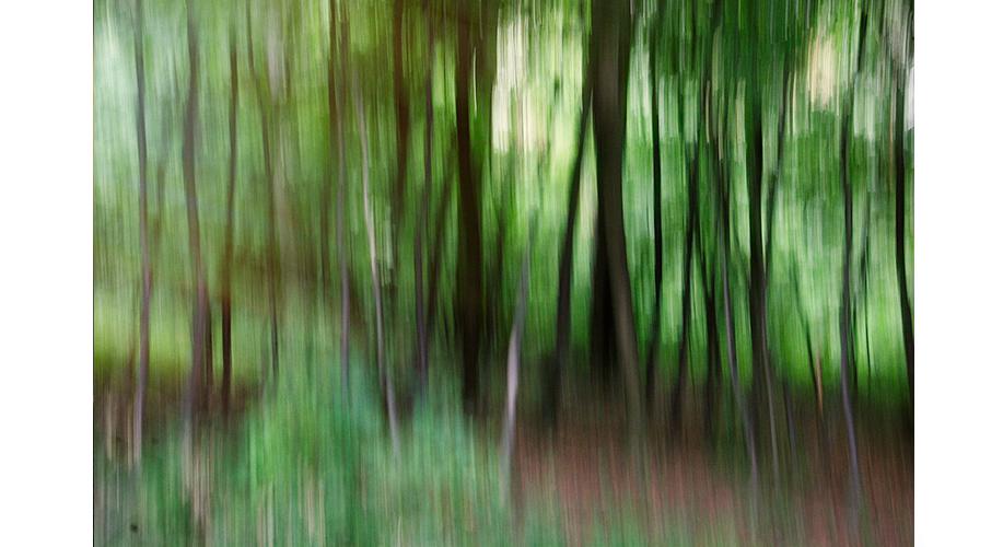 Tree14_.jpg