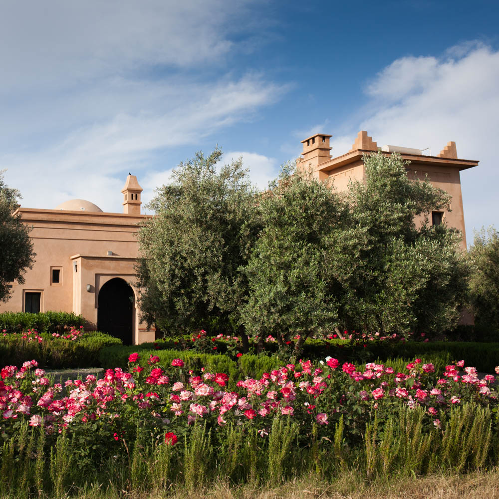 Marrakesh, Morocco: and a tale of roses at Peacock ...
