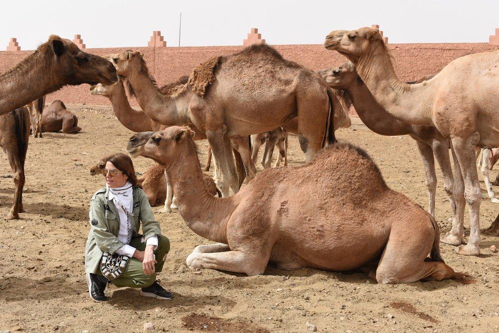 Maryam camels.jpg