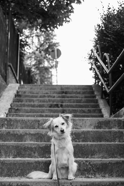 Cane Ritratto, Laura Griffiths Fotografia Torino