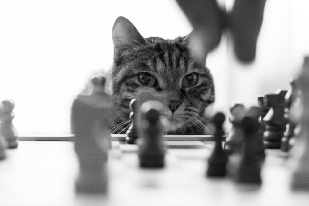 cat chess, she knows, Laura Griffiths