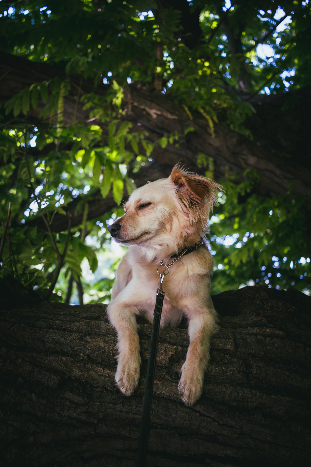 Dog in a giant tree. :)