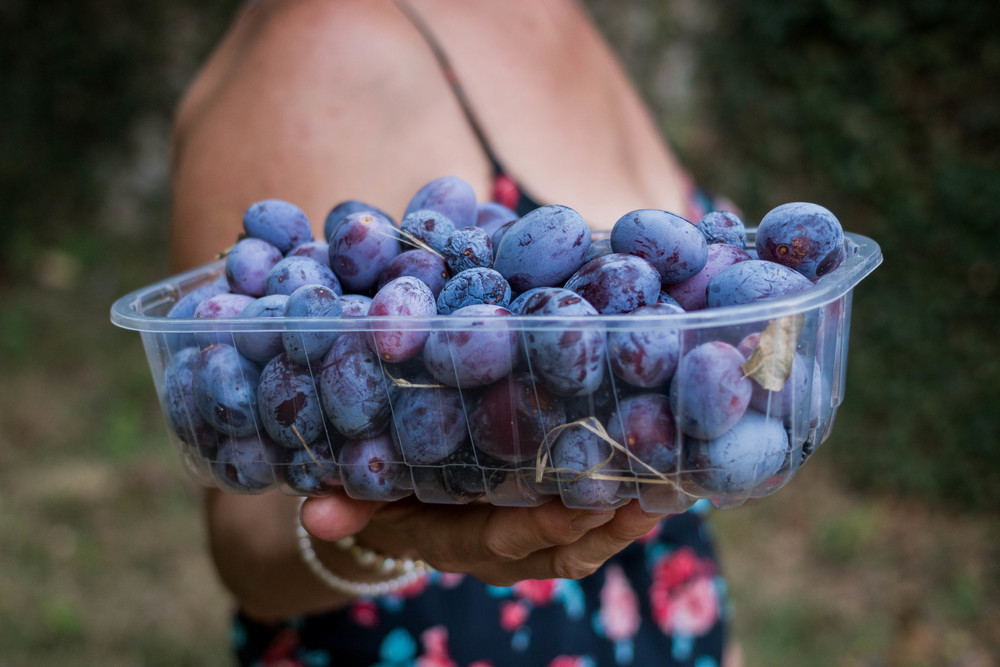 ramasin torino racolto harvest fruit prunes grapes italian