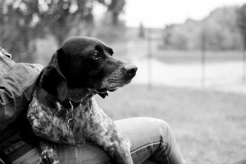 Pet photographer bau Fotografo torino cane