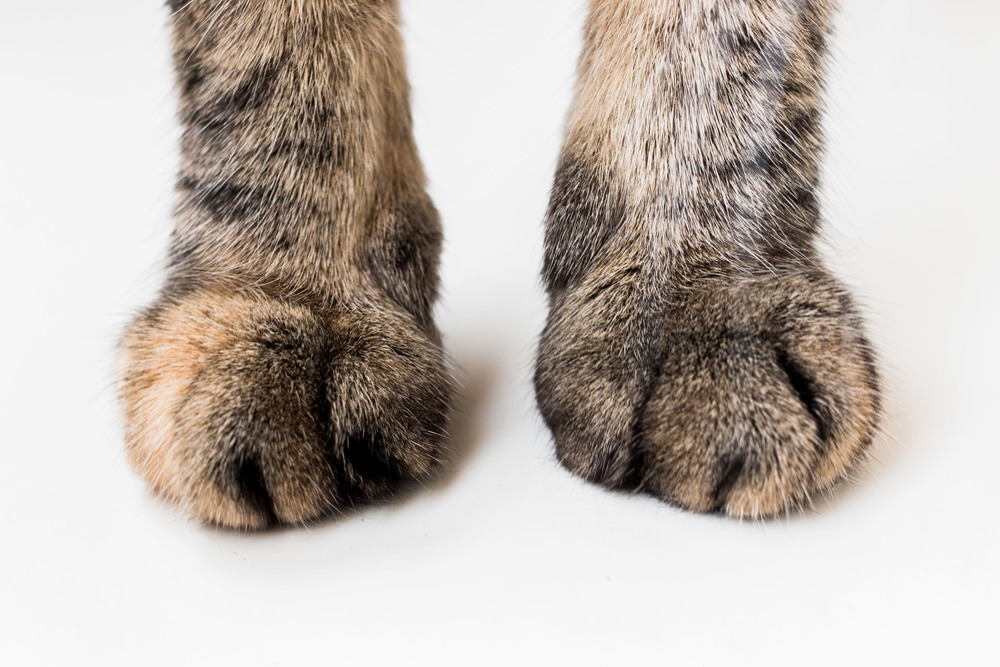 cat gatto gatti fotografo animali torino italia Laura Griffiths