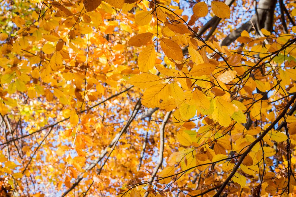 Fall fotografia autunno torino parco cani pellerinaFall fotografia autunno torino parco cani pellerina