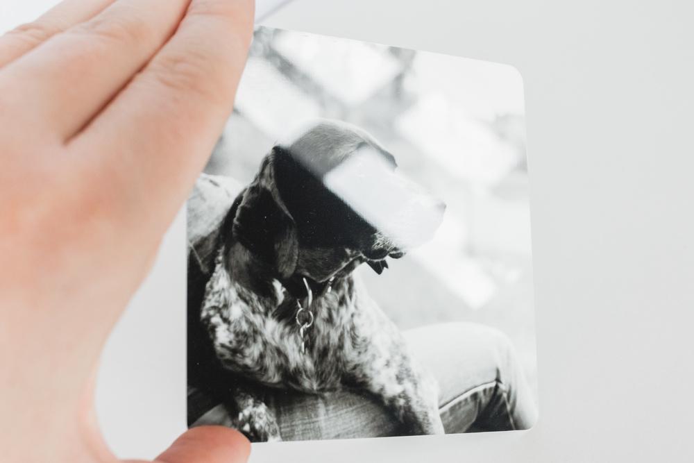 Metal prints Stampe in Metallo Laura Griffiths Fotografia prodotti