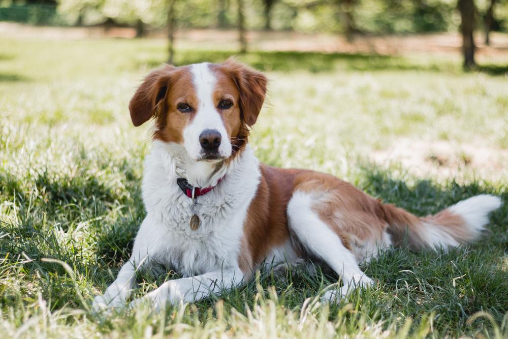Cani ritratti cane parco torino fotografo laura griffiths fotografia