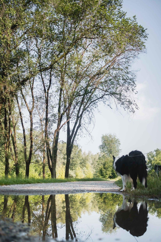 Dog Portraits at the park Ritratti del cane al parco della pellerina Fotografo Laura Griffiths Fotografia Torino Italia