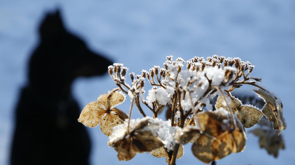 giardino_inverno
