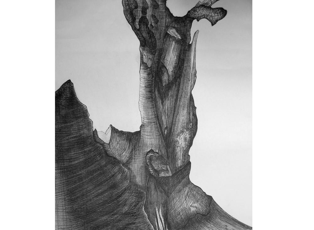 Arbre calciné n°2, 45cm x 55cm