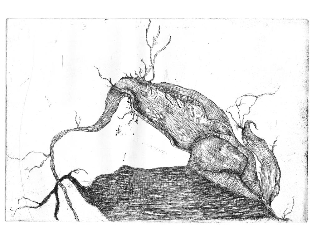 Germination, eau-forte, 29cm x 21cm