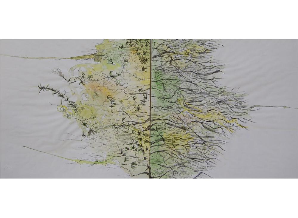 Succulences, aquarelle, encre et graphite sur papier Ingres, 50x100 cm
