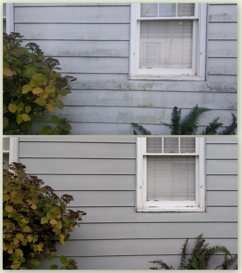 Vinyl Siding - Algae Removal